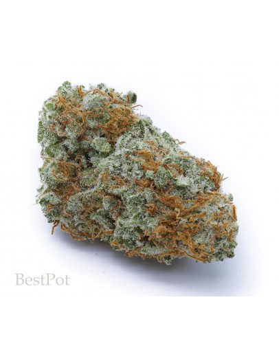 Blue Dream (AAA)