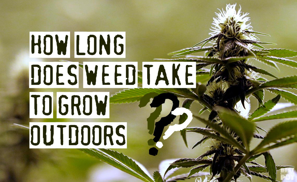 How Long Does Weed Take To Grow Outdoors?