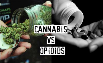 Cannabis vs Opioids, What Deals Better with Chronic Pain?