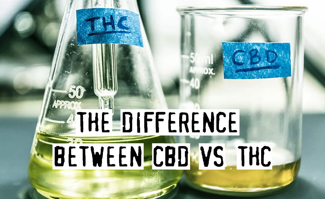 Guide To The Major Differences Between THC And CBD