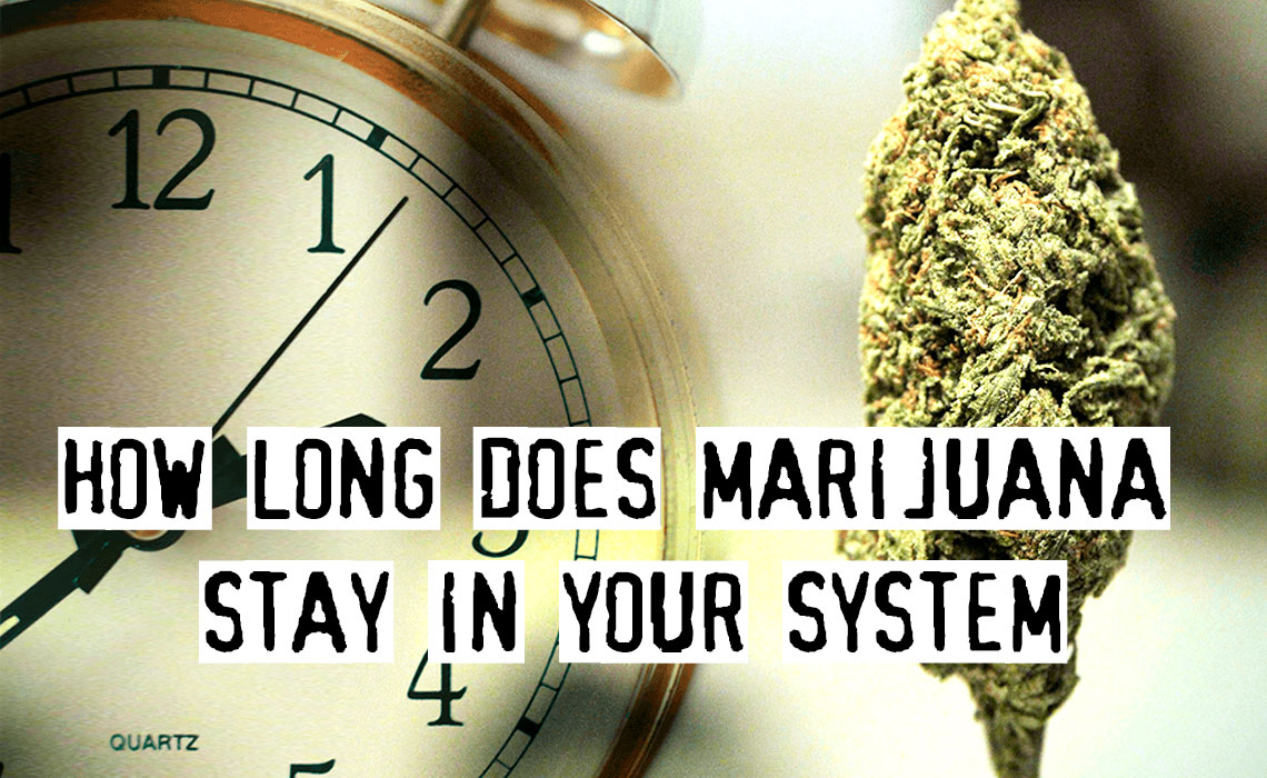 How Long Does Marijuana Stay In Your System? Answer Is Here!