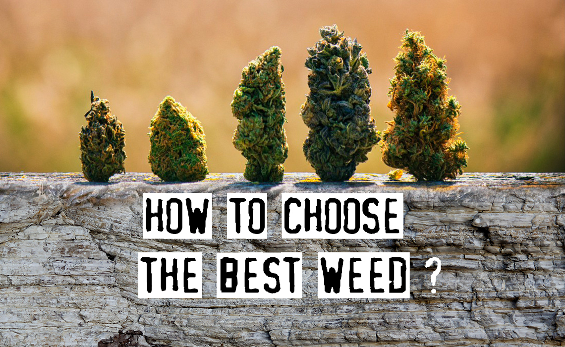 How To Choose The Best Weed, Tips From Experts!