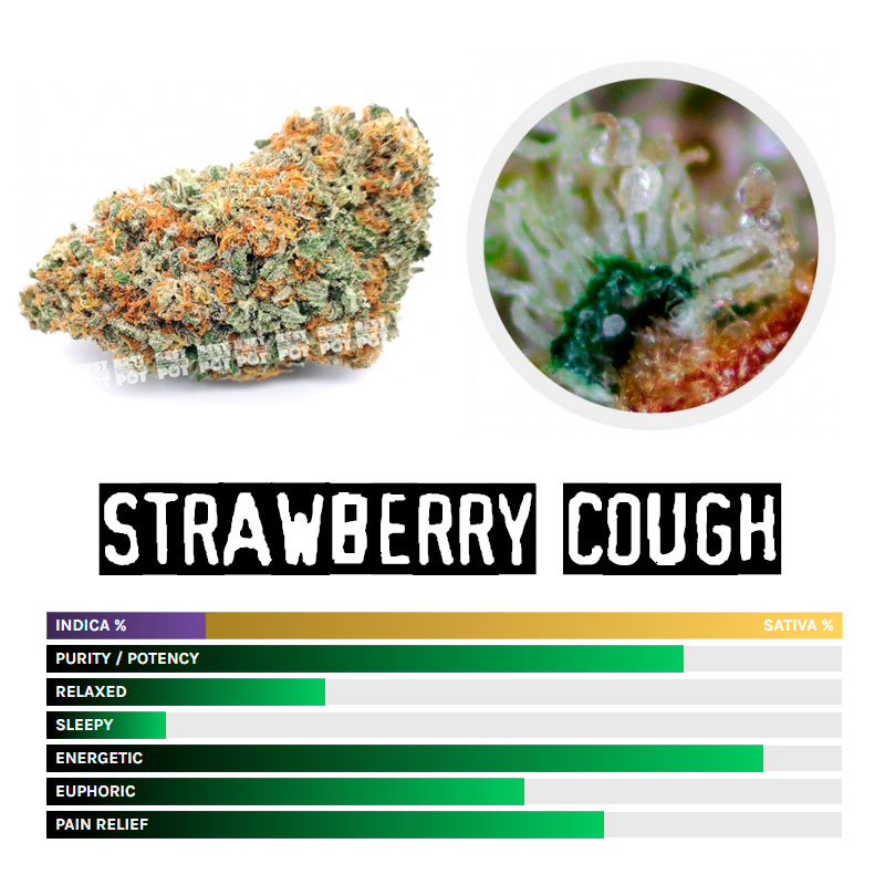 STRAWBERRY COUGH STRAIN (AAA)
